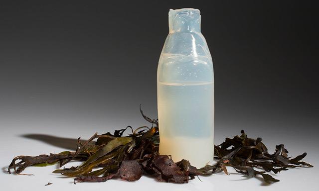 hambrientos-botellas-de-algas